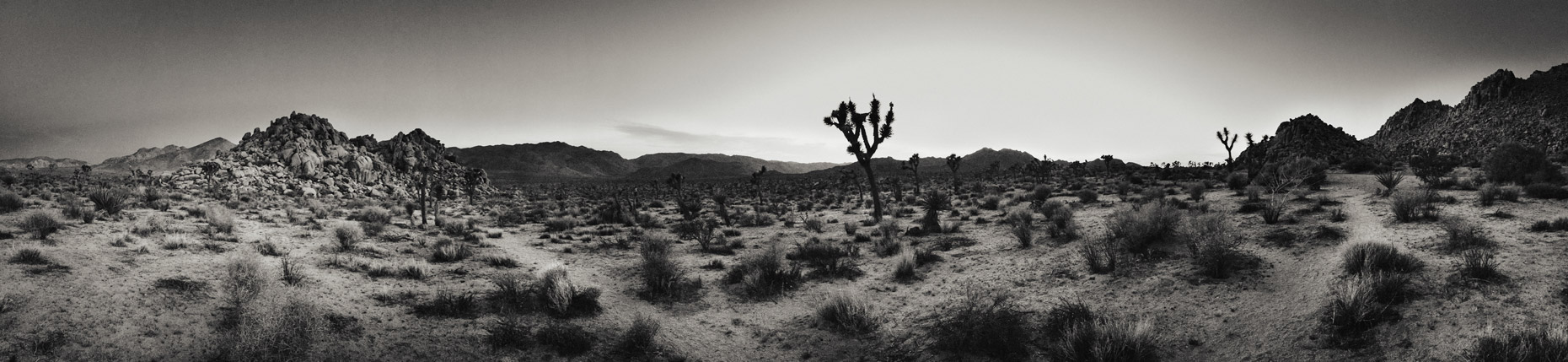 JoshuaTree_Panoramic